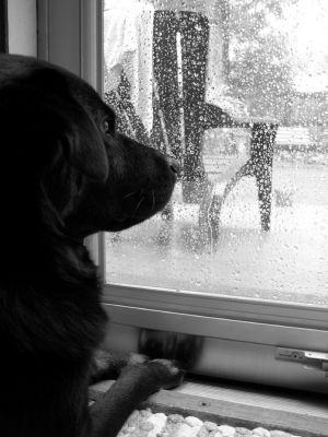 Barking at the Rain